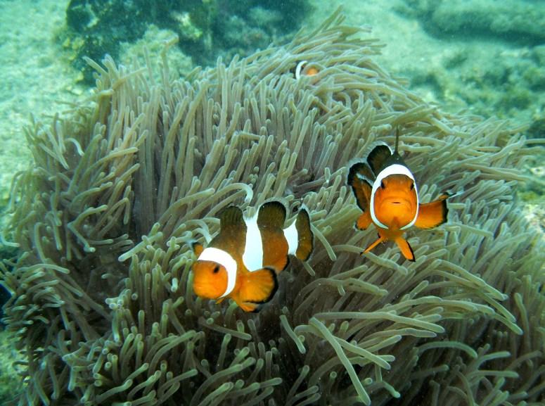 Nemo copy copy 1
