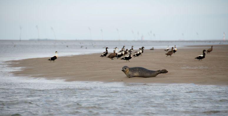 Vi så flere sæler på turen, denne meget tæt på / We saw many seals, this very close by.